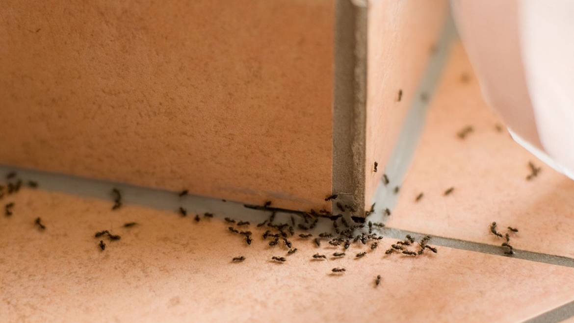 In-Home Pest Control