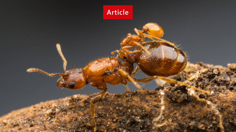 Ants Identification