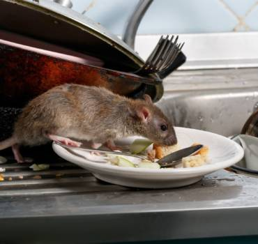 Rodent Removal